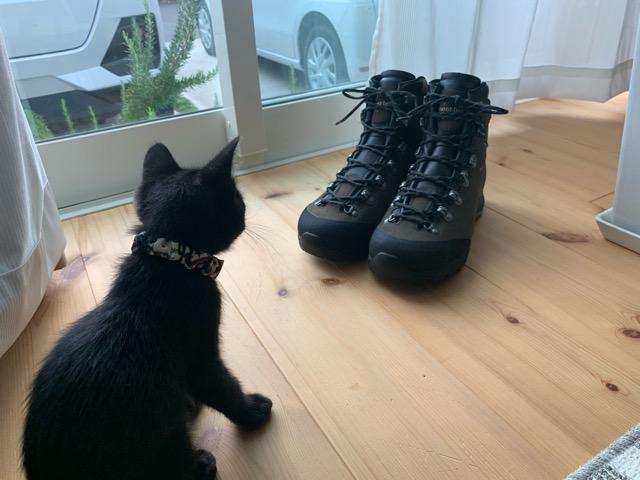 靴紐を選ぶ猫