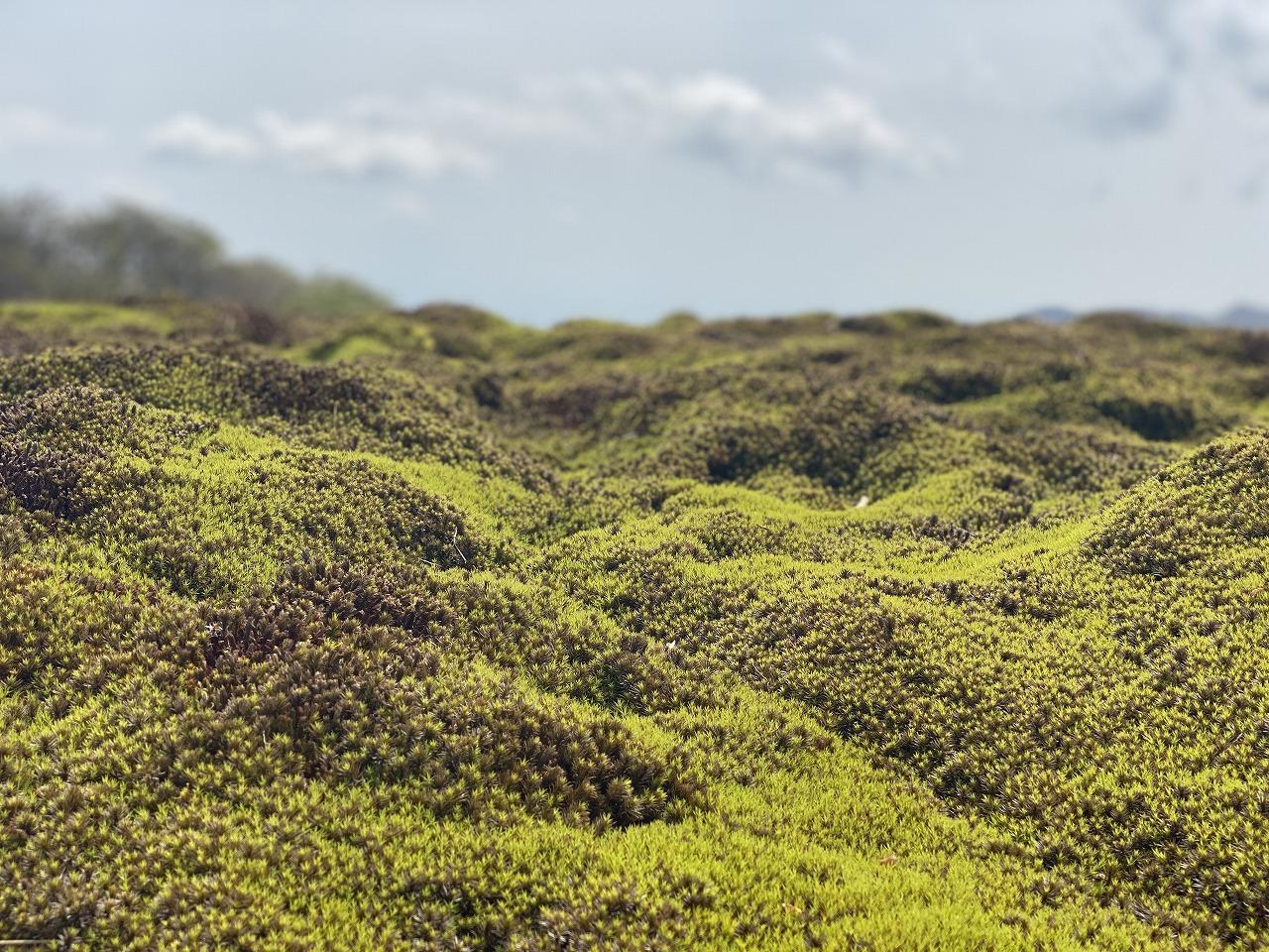 イブネの苔